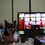 認知症テレビ
